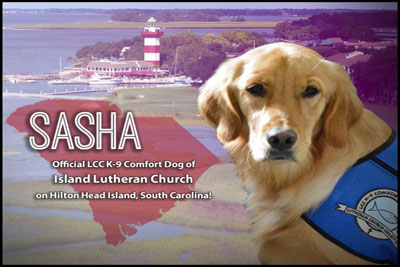 SASHA COMPORT DOG